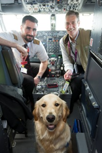 dog in plane small